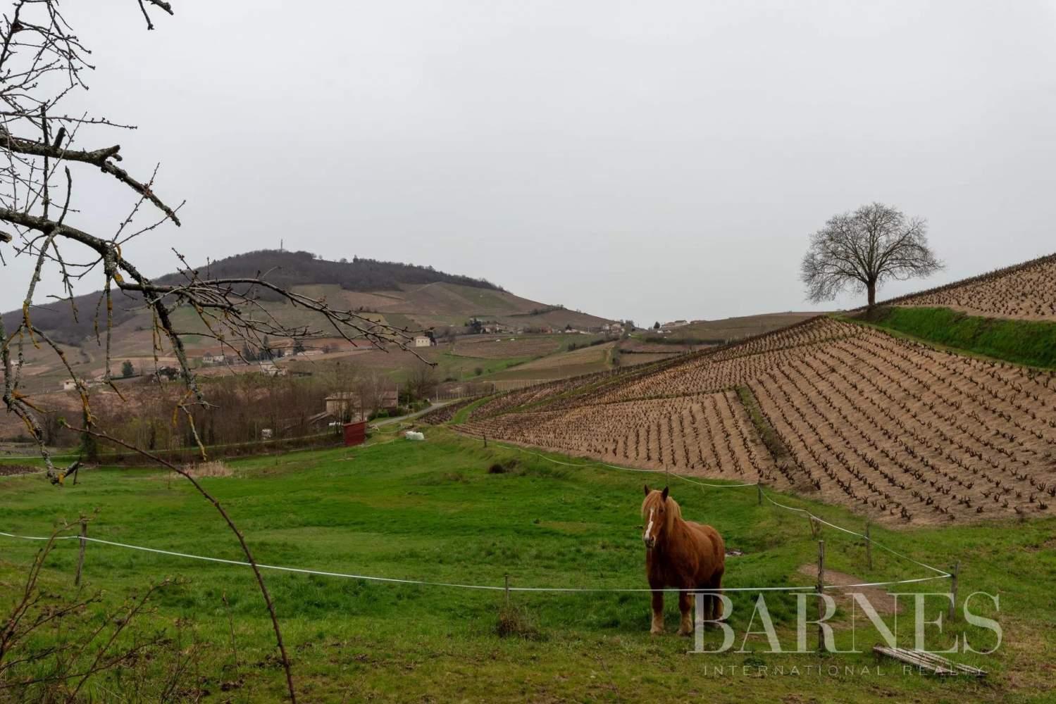 Quincié-en-Beaujolais  - Ferme 9 Pièces 8 Chambres - picture 11