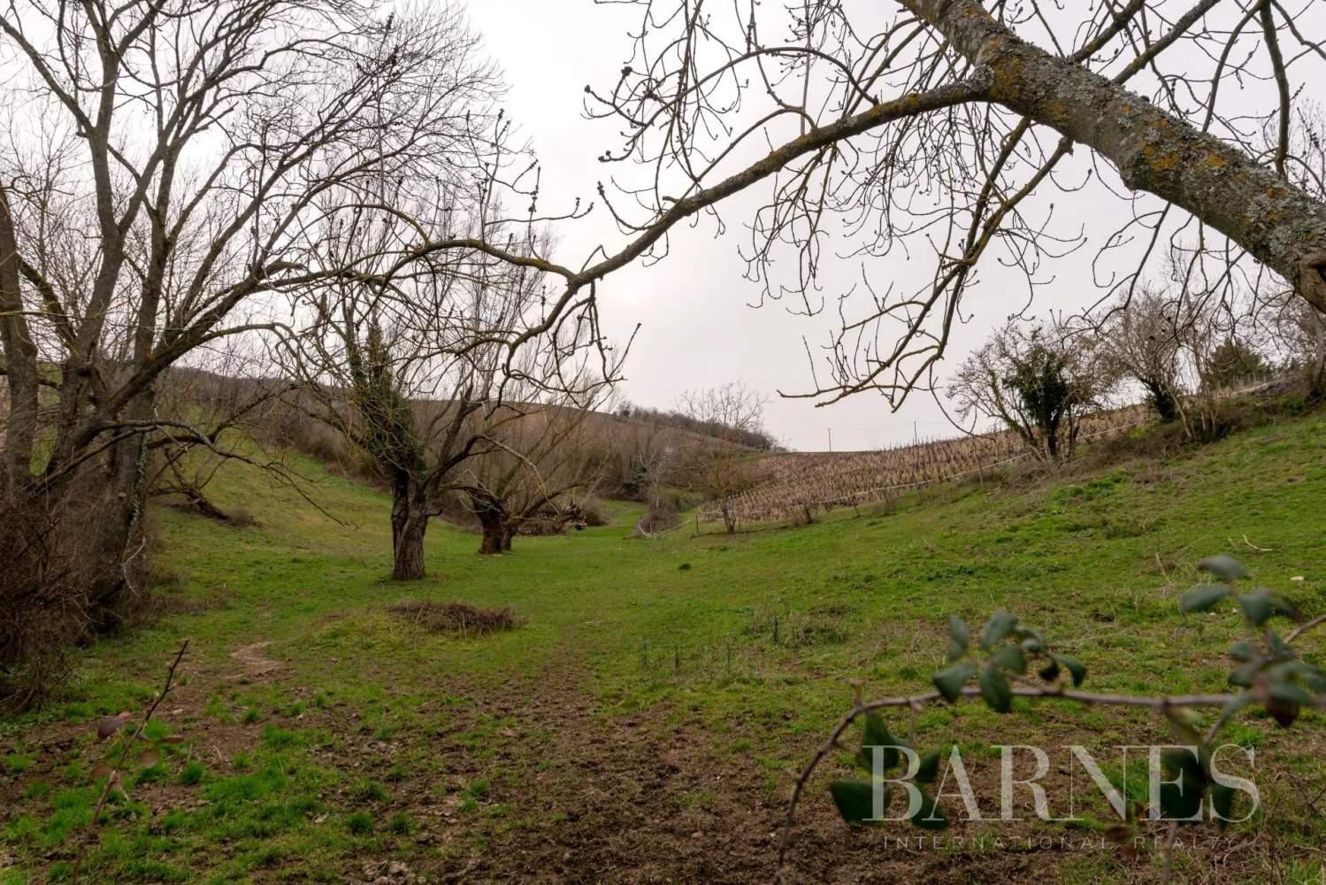 Quincié-en-Beaujolais  - Farm 8 Bedrooms - picture 15