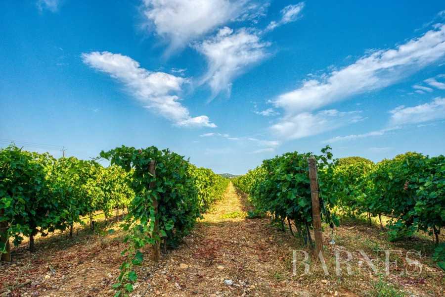 Propriété viticole Montpellier