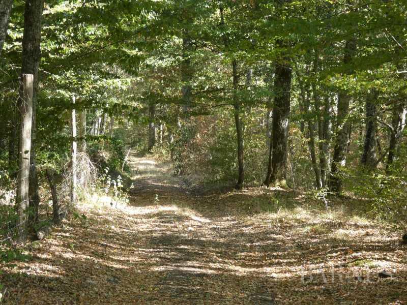 GIEN  - Domaine de chasse 10 Pièces