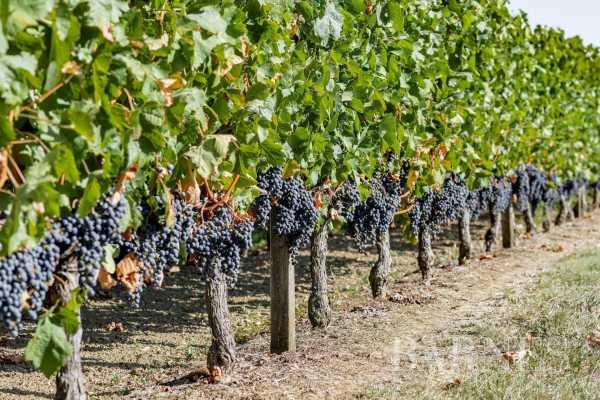 Propriété viticole Bordeaux  -  ref 4191316 (picture 2)