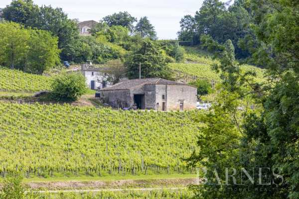Propriété viticole Bordeaux  -  ref 3705013 (picture 3)