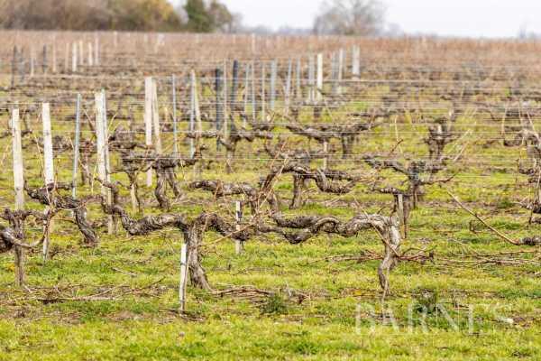 Propriété viticole Bordeaux  -  ref 5771330 (picture 1)