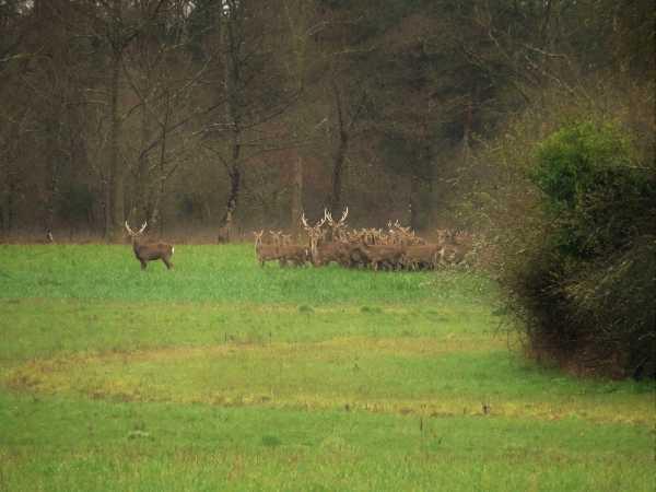 Domaine de chasse AUBIGNY SUR NERE  -  ref 2554391 (picture 3)