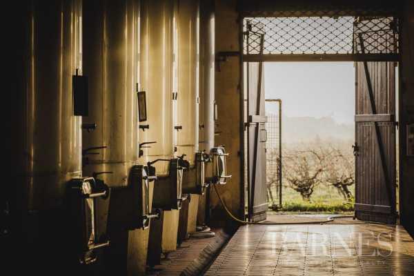 Propriété viticole Bordeaux  -  ref 5026037 (picture 2)