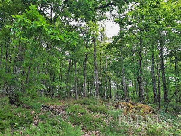 Domaine de chasse Argenton-sur-Creuse  -  ref 5660795 (picture 2)