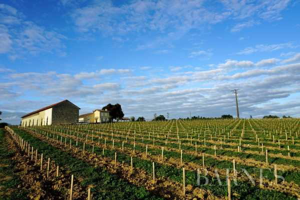 Vineyard property Bordeaux  -  ref 3705202 (picture 3)
