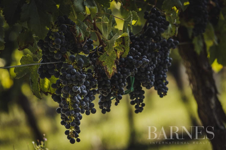 Bordeaux  - Propriété viticole 8 Pièces - picture 6