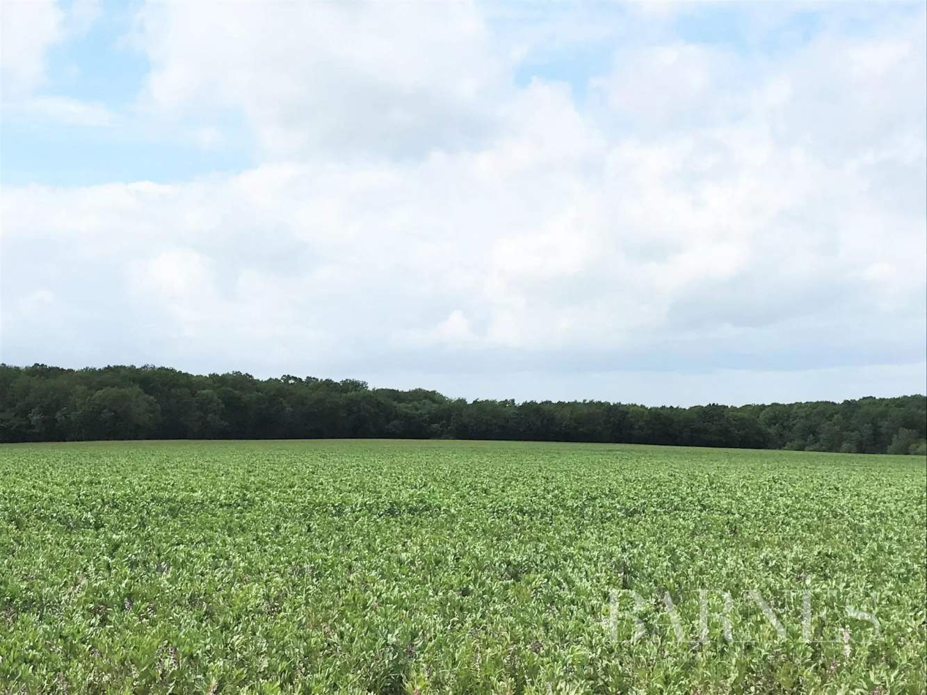 Châteauroux  - Domaine de chasse 1 Pièce - picture 14