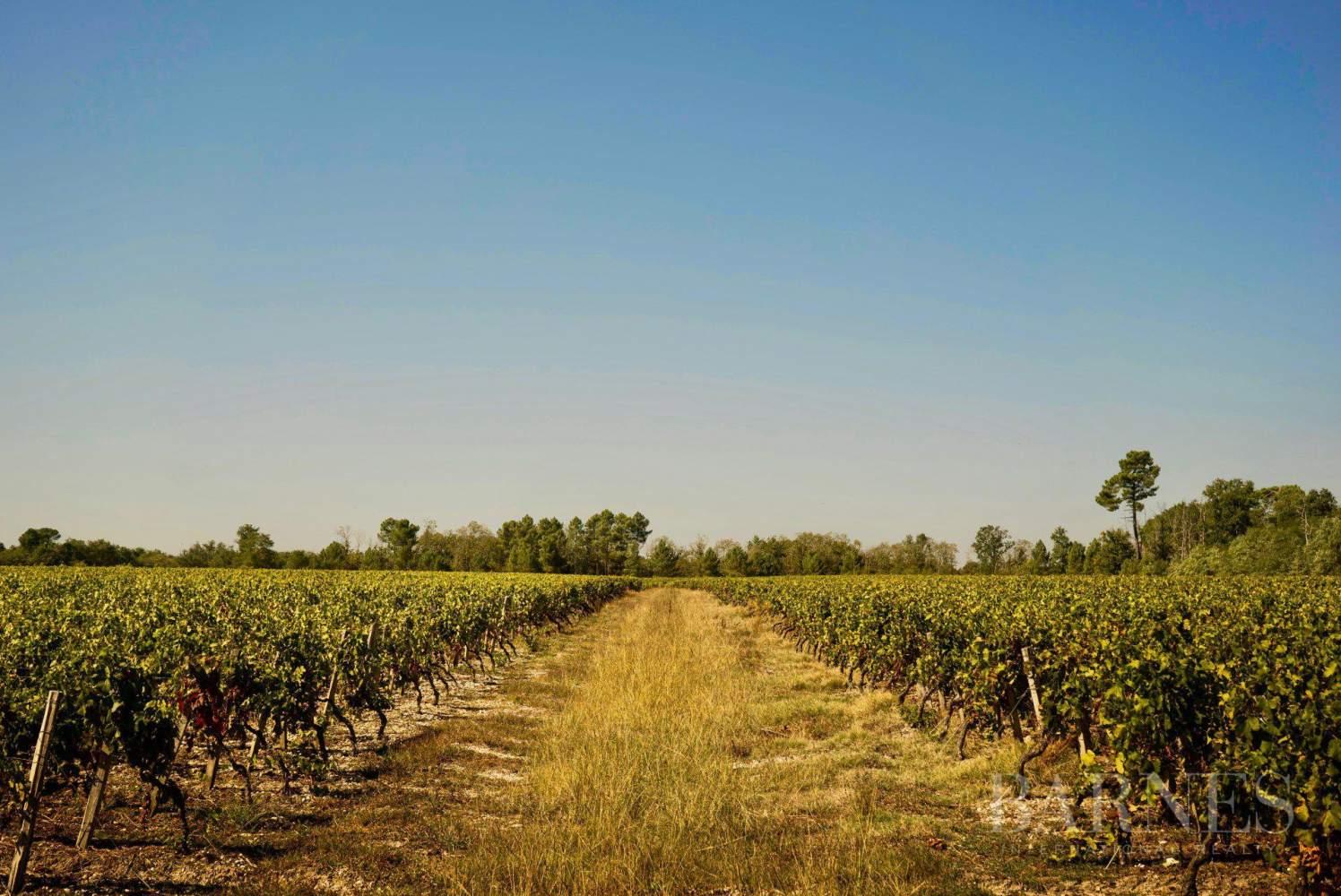 Bordeaux  - Propriété viticole 25 Pièces 6 Chambres - picture 1