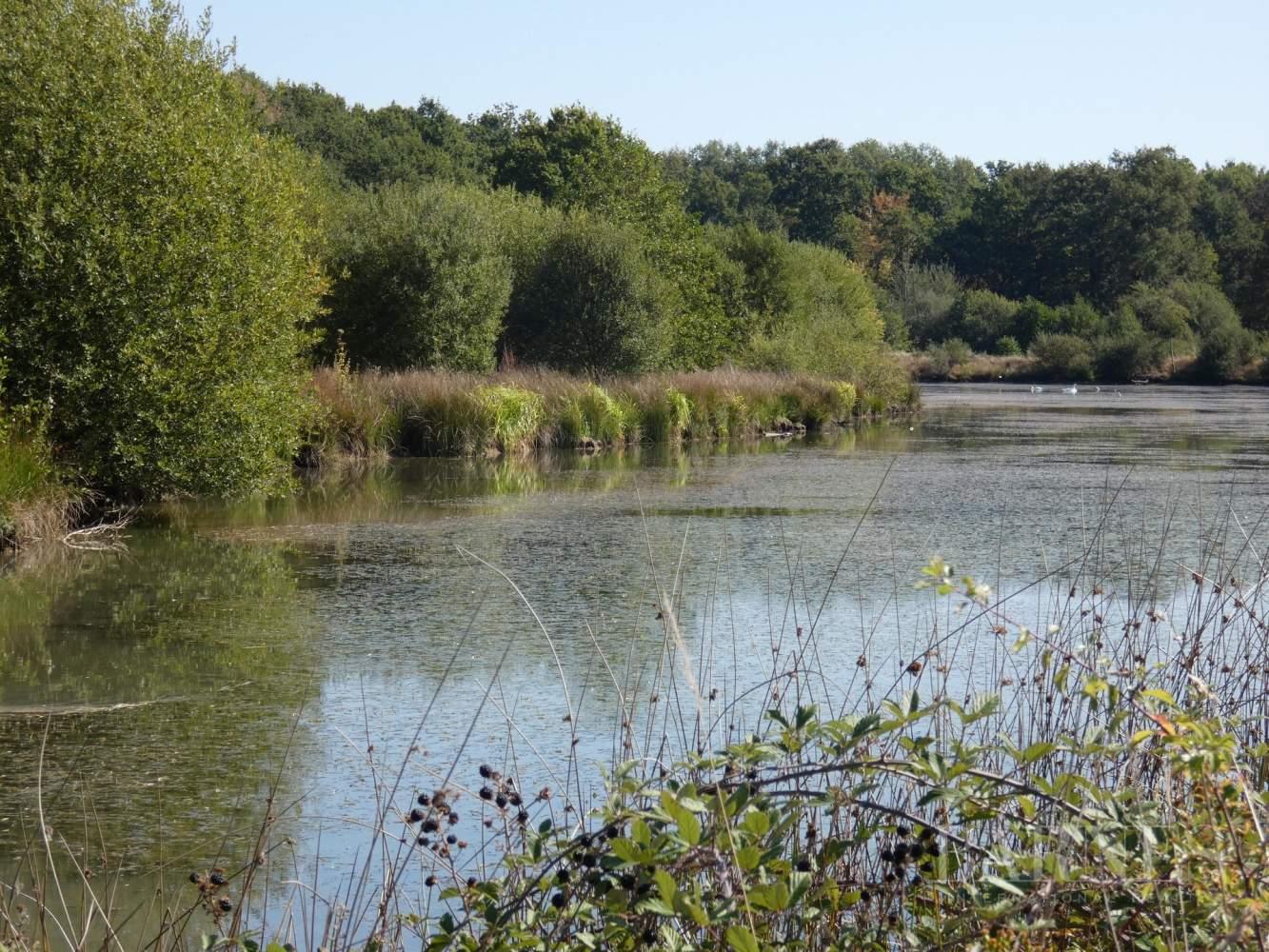 GIEN  - Domaine de chasse 10 Pièces - picture 1