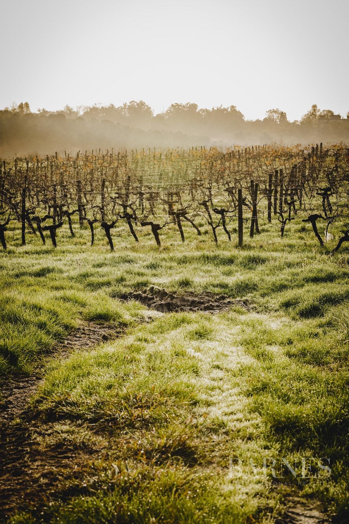 Bordeaux  - Propriété viticole 1 Pièce - picture 8