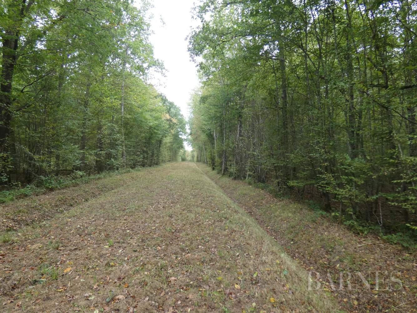 Châtillon-Coligny  - Domaine de chasse 11 Pièces - picture 7