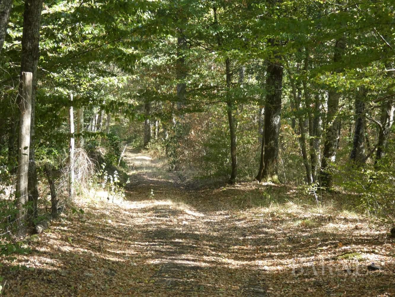 GIEN  - Domaine de chasse 10 Pièces - picture 5
