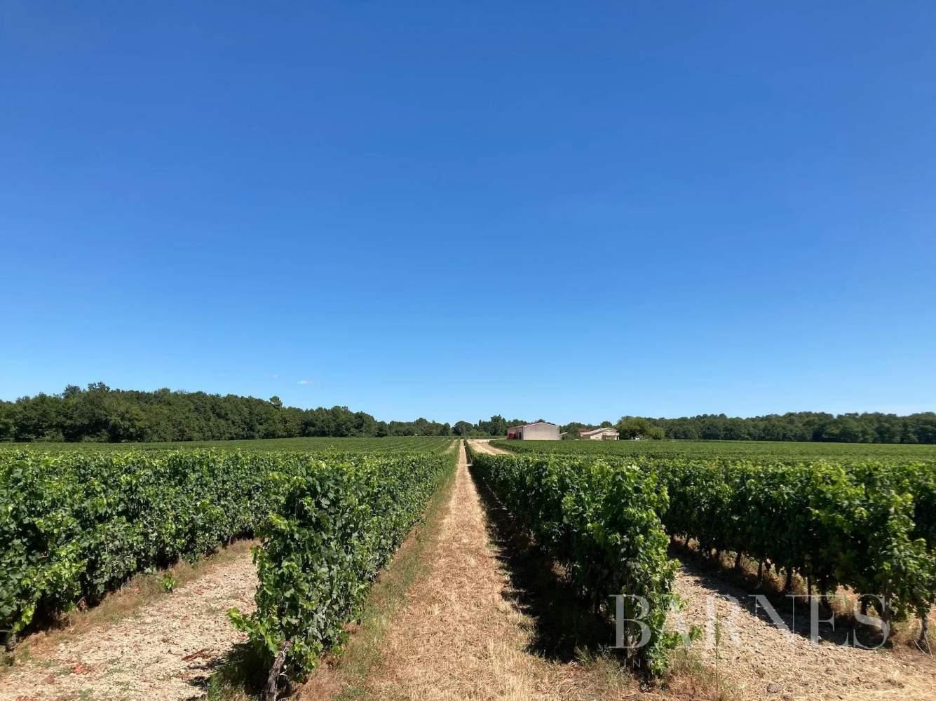 Bordeaux  - Propriété viticole 1 Pièce - picture 1