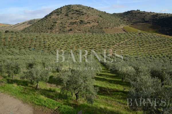 Terreno Douro  -  ref 2676343 (picture 3)